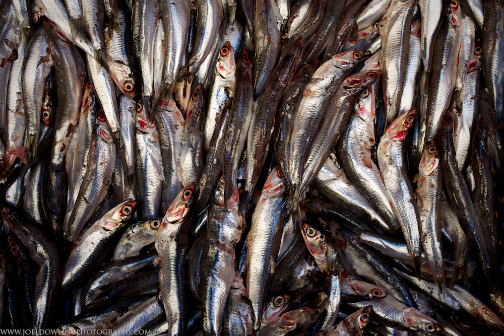Fish in the wet market section of the medina - Fes, Morocco.